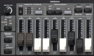E5-OrganSection